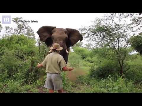 突進してくる象をにらみつけてフリーズさせる男