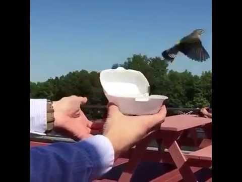 元気でね~~小鳥を自然に帰したら・・・