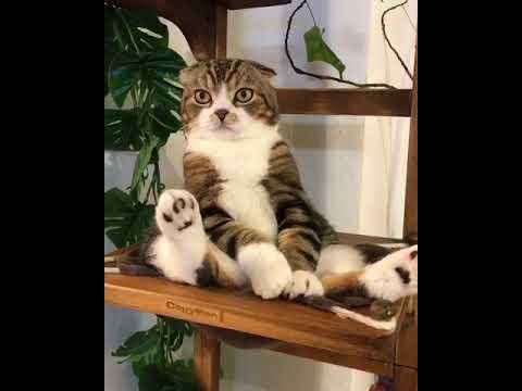 ぬいぐるみのようなネコ