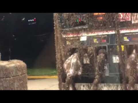 ある生き物に占拠されたガソリンスタンドがヤバすぎw