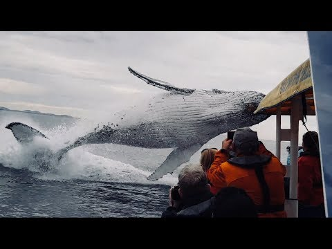 ホエールウォッチングで鯨が最高のサービス