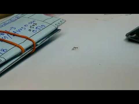 アリがダイヤモンドを盗んでいく映像