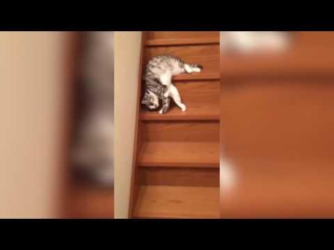 階段降りるのだるいにゃ~