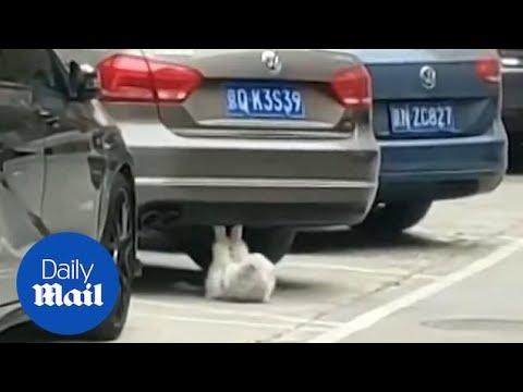 駐車場でヤバいネコが発見されるw