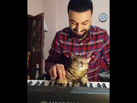 自分で弾くピアノにうっとりするネコ