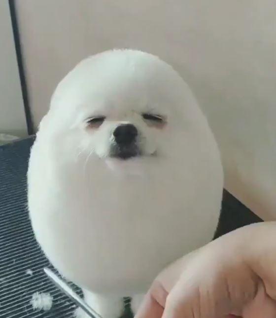 まんまる犬
