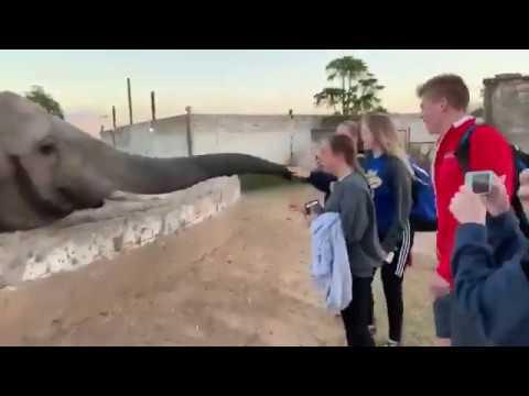 あ、ゾウだ!写真撮ったろw