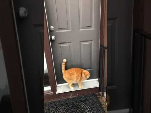 ネコ「トントントン、帰ってきましたよ」