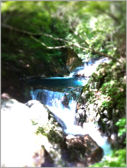 西沢渓谷・イノブタの旅