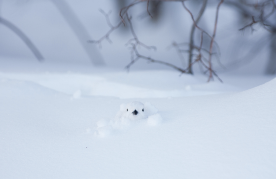 snow_animal_1