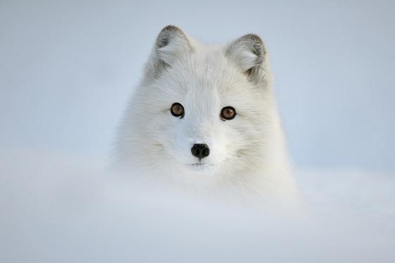 snow_animal_5