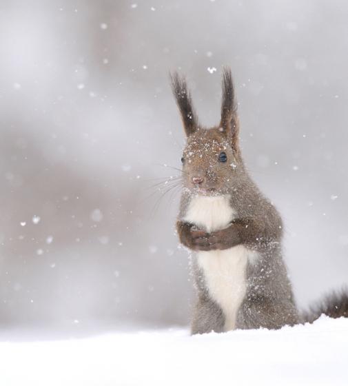 snow_animal_9