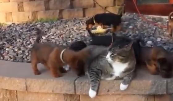 紙コップが頭にはまったネコを助けず撮影を続ける人間を横目に・・・