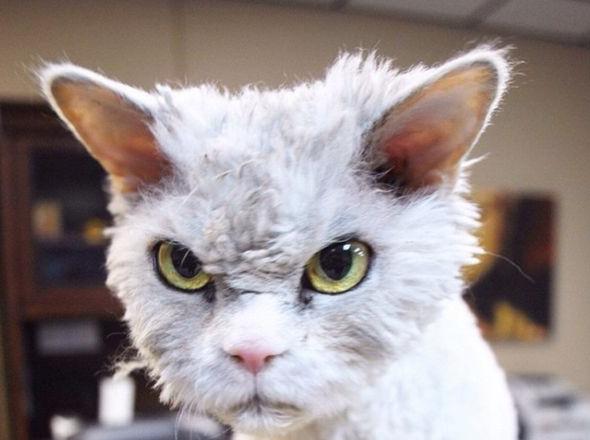 「あん? にゃんのか?」 怒り顔の猫、アルバートさん