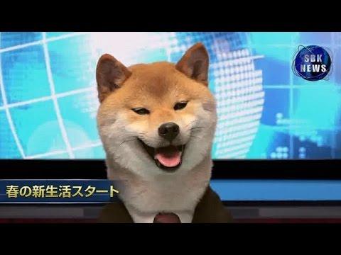 犬山柴男キャスターによるSBKニュース