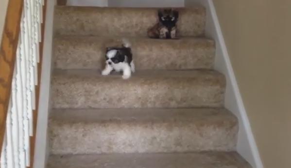ネコ撃退スプレー!? ネコを躾ける為のスプレーにビビる猫達。