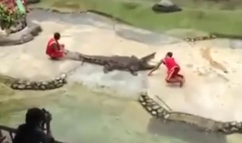 イエネコが巨大なアナコンダに巻き巻きされて捕食されそうになる