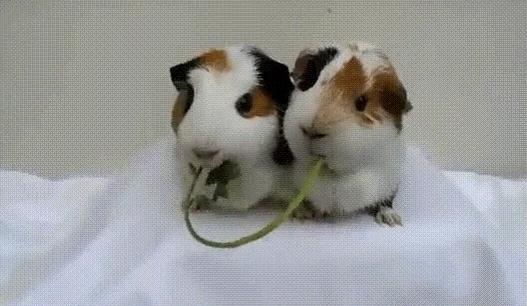 簡単に生け捕りできるネズミトラップを2つほど紹介