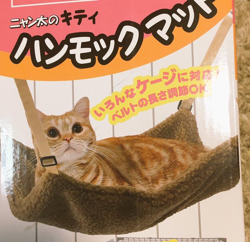 理想→→→現実