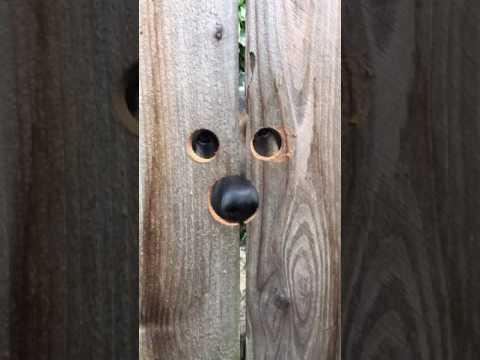 何者かに覗かれている気がする・・・