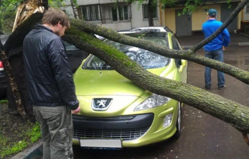 俺の車が折れた木の下敷きに・・・