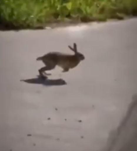 Google Street Viewで見つけたウサギ