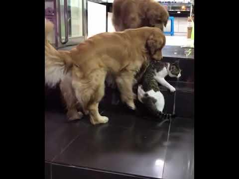 威嚇するネコをなだめるワンコ