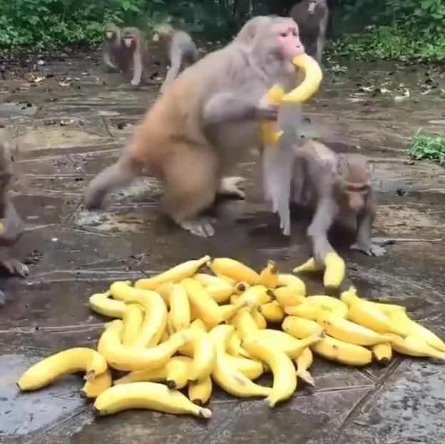 お猿のモラル