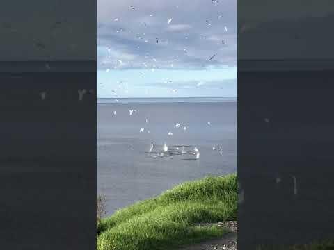海鳥の群れが一斉掃射された??