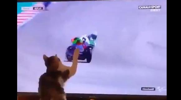 ネコさん、パンチ一発でバイクを転倒させてしまう